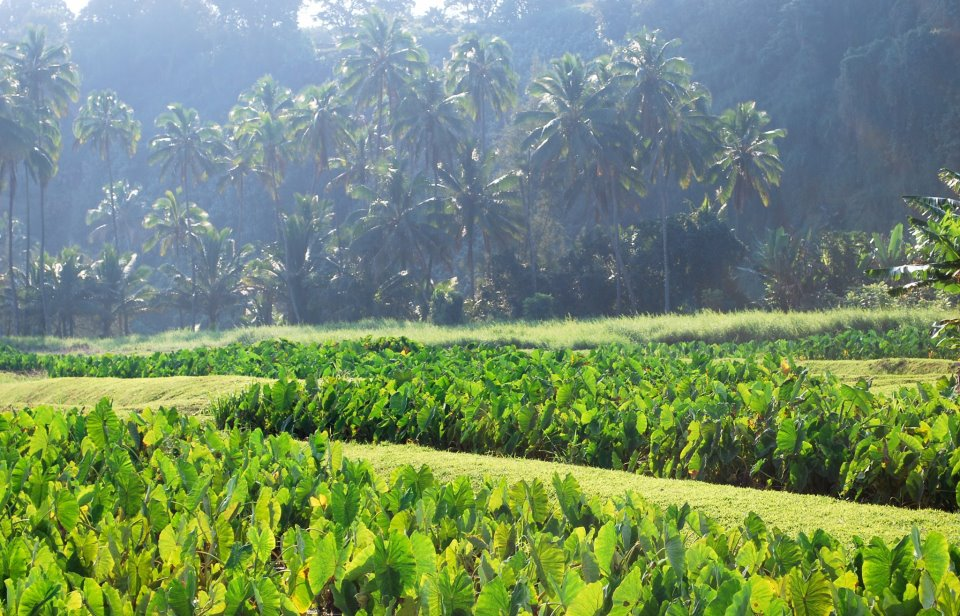 Maui Dept. of Agriculture